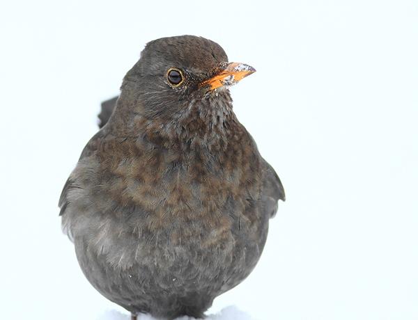 HmeBbird24313