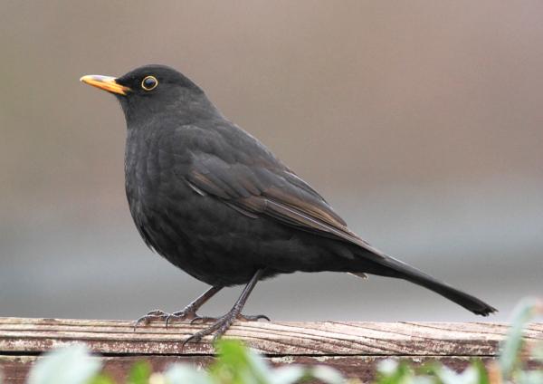 homeBbird5114g