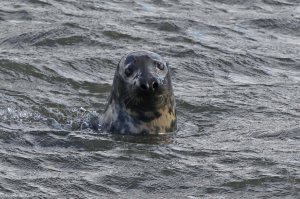 An inquisiitve seal