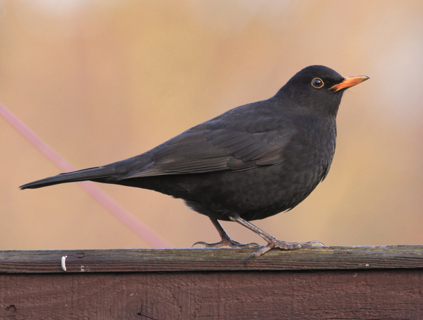 homeBbird5114